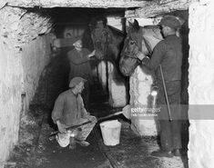 Pit ponies in their underground stables, South Wales, 24 June 1931. Pit ponies in their underground stables, South Wales, 24 June 1931. Photograph by James Jarche (1891-1965).