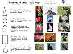 Красота, вдохновленная природой - Path to Your Charm: Harmony of Lines. Часть 1