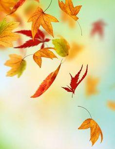 Falling Autumn leaves....