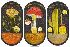 Alle drei Pflanzen Anatomie Kunst Drucke DEAL von Rachelignotofsky