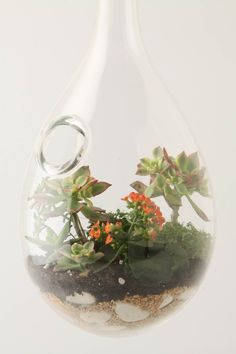 Hand blown translucent glass Droplet Terrarium handcrafted by Andi Kovel and Justin Parker of Esque Studios