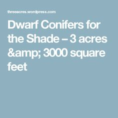Dwarf Conifers for the Shade – 3 acres & 3000 square feet
