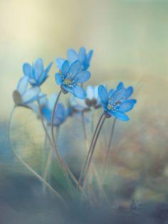 Memories of a spring av Davis Zandersons - Fotokonst från Gallerix. Besök oss på https://www.gallerix.se