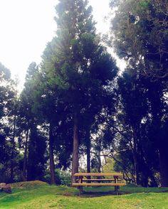La forêt du Maïdo