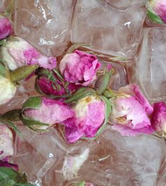 Organic Rosebuds with ice cubes at Tea Palace head office