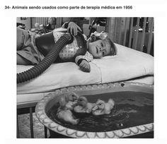 Terapia usando animais em 1956.