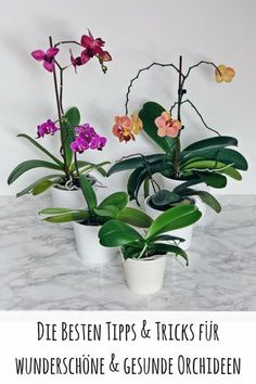Tipps & Tricks für wunderschöne und gesunde Orchideen Tips & Tricks for beautiful and healthy orchids. The most important tips to care for orchids. green thumbs, plants, orchids tips and tricks Balcony Flowers, Balcony Plants, House Plants, Garden Care, Plant Design, Garden Design, Rotation Des Cultures, Orchids In Water, Blue Lotus Flower