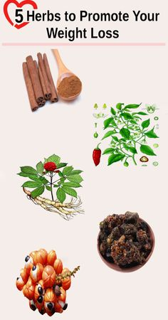 5 Herbs to Promote Your Weight Loss