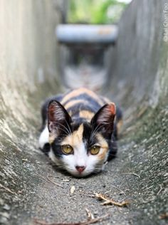 """* * """" Me can'ts even hunker down in a drain pipe and der's de damn camera lens. Can'ts a kitteh finds any time alone? """""""