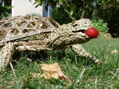 La tortue cistude d'Europe @LVS2 Europe, Hanging Gardens, Wicker, Turtle, Animaux