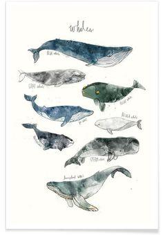 Whales en Affiche premium par Amy Hamilton | JUNIQE                                                                                                                                                                                 Plus