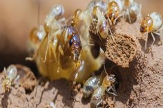 To get more information about us then you can visit us at: http://www.blackwaterpestmanagement.com.au/