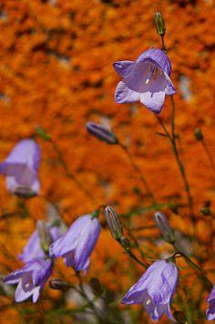 Purple and Orange by ~Zoomwafflez on deviantART