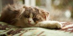 Kedilerde Uyku | Kedi Sahipleri