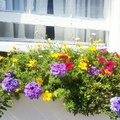 Nantucket in bloom