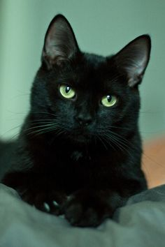 Green-eyed Beauty #blackcatsrule