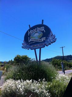Hood River Lavender Farm. Hood River, OR