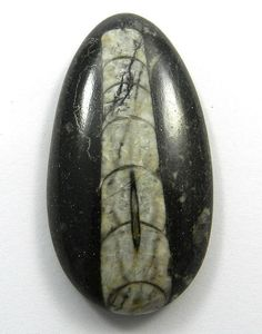 95CT Genuine 100% Natural Orthoceras Fossil 53x28mm Oval Cab Loose Gemstone #Handmade