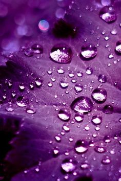 Colour Pop - purple