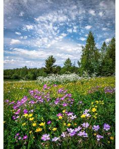 Flowery field (Finland) by Asko Kuittinen ? Flowers Nature, Wild Flowers, Meadow Flowers, Beautiful Landscapes, Beautiful Gardens, Quelques Photos, Summer Memories, Green Landscape, Summer Dream