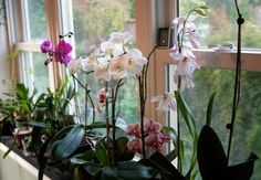 Yes, you CAN grow orchids | Offbeat Home- seems like an article with good tips about growing orchids- hopefully I can keep mine alive!