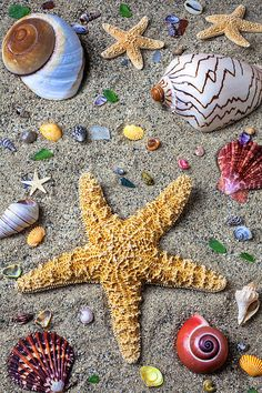 starfish and shells by Garry Gay