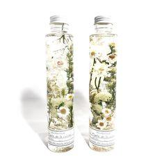 Herbarium vintage | Plante de la cuisine
