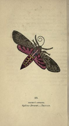 3 - The book of butterflies, sphinxes and moths; - Biodiversity Heritage Library
