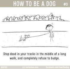 How To Be A Dog | Last Lemon