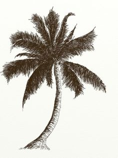 learn how to draw coconut tree with pencil step by. learn how to draw coconut tree with pencil step by step tutorial. Coconut Tree Drawing, Palm Tree Drawing, Palm Tree Art, Palm Trees, Tree Sketches, Drawing Sketches, Sketching, Realistic Drawings, Cool Drawings