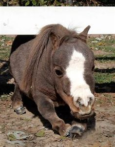 Her name is Thumbelina and she is beautiful!  She's the smallest horse in the world and works for charity!