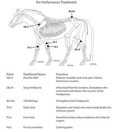Acupointers - Natural Horse Magazine