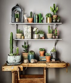 cactus-and-succulents:    found on pinterest