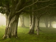 Foggy Forest, Basque Country, Spain I feel like this is me, in nature. Foggy Forest, Tree Forest, Misty Forest, Magic Forest, Beautiful World, Beautiful Places, Paraiso Natural, Basque Country, Foto Art