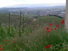 Côtes du Rhône, St Chapelle vineyards.