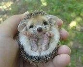 super cute - Bing Images