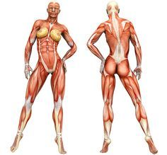 Click on the body part you want to work on and receive a list of tips and videos demonstrating workouts for that body part.