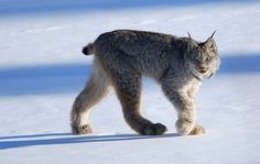 Beautiful planet Earth  Ana Melo Discussion  -  Aug 2, 2013  #Lynx   Lynx
