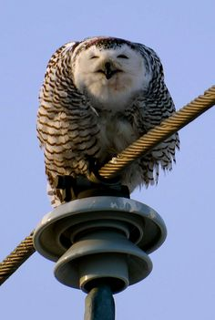 Owls can always make me smile ^^