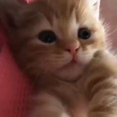 Cute Animals Dancing Videos against Cute Cartoon Animals To Print. Cute Cartoon Animals With Big Eyes To Draw Easy per Cute Baby Animals Cartoon Images Cute Baby Cats, Cute Cats And Kittens, Cute Funny Animals, Cute Baby Animals, I Love Cats, Crazy Cats, Funny Cats, Adorable Kittens, Cute Kitty