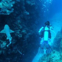 """Xanadu Island Resort, Ambergris Caye, Belize - PointsandTravel.com """"Have you ever really wondered what it looks like down under?  No, not Aussie land, I mean way down under… underneath the ocean?"""" Come along with me as I dive Belize."""