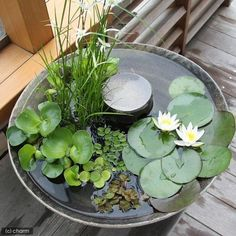 awesome backyard ponds and water garden landscaping ideas 00001 * kebun. Container Pond, Container Water Gardens, Container Gardening, Patio Pond, Ponds Backyard, Backyard Waterfalls, Backyard Parties, Garden Ponds, Koi Ponds