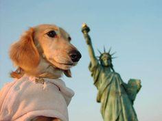 One #patriotic pooch!