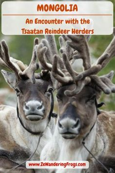 Through millennia-old traditions, the Tsaatan livelihood has been tied to their reindeer herd. Today the roughly 500 Dukhan left are some of the last of the reindeer herders in the world.