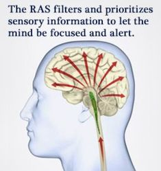 Reticular activating system   Reticular activating system ...