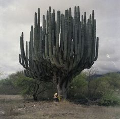 The Valley of the Giants: San Felipe, Baja California