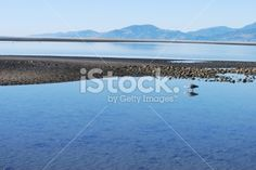 Heron and Reflection, Mapua Estuary, Nelson, NZ Royalty Free Stock Photo