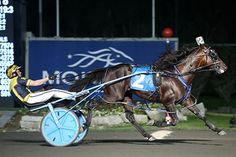 Canadian Pacing Derby and Metro Pace September Three breeds Standardbred Horse, Local Events, Community Events, Horse Racing, Ontario, Special Events, Derby, September, Strong