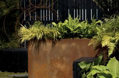 IOTA Corten steel planters Botanic Gardens Edinburgh, Corten Steel Planters, Container Plants, Plant Containers, Weathering Steel, Potted Plants, Plant Pots, Copper Color, Botanical Gardens