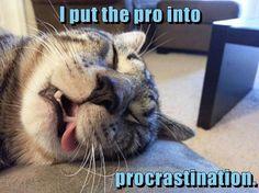 I put the pro into procrastination. http://cheezburger.com/9035706624/pro-cat-stination